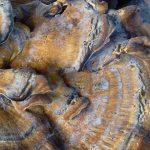 champignons (102)